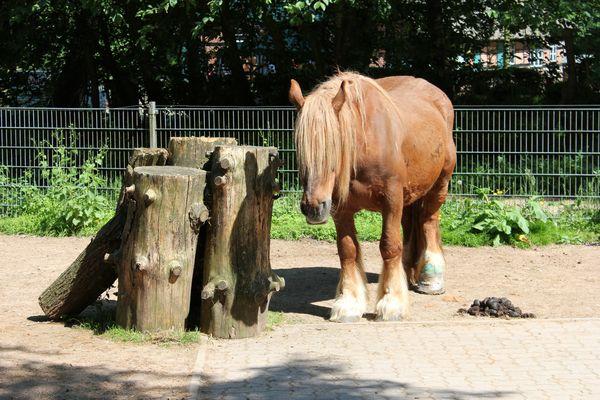 Pferd mit Verband
