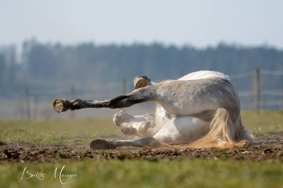 Pferd nach der Arbeit