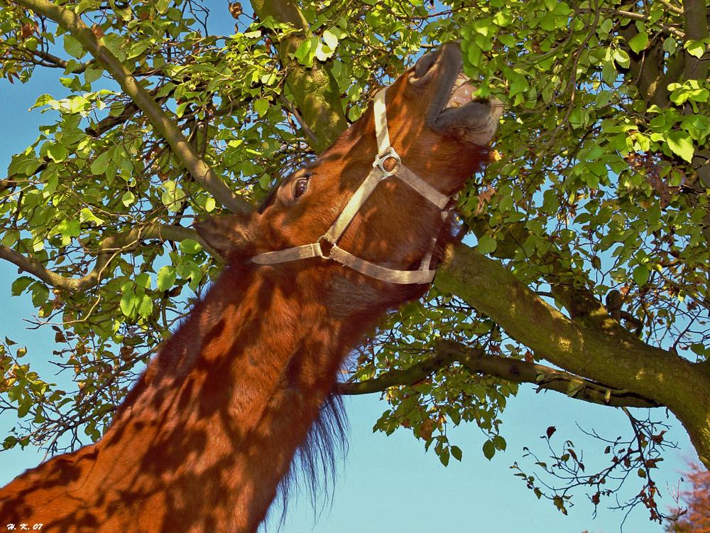 Pferd oder Giraffe;-)