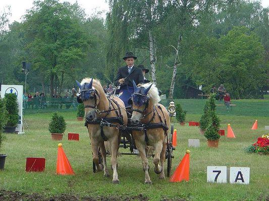 Pferd Rasant 2005