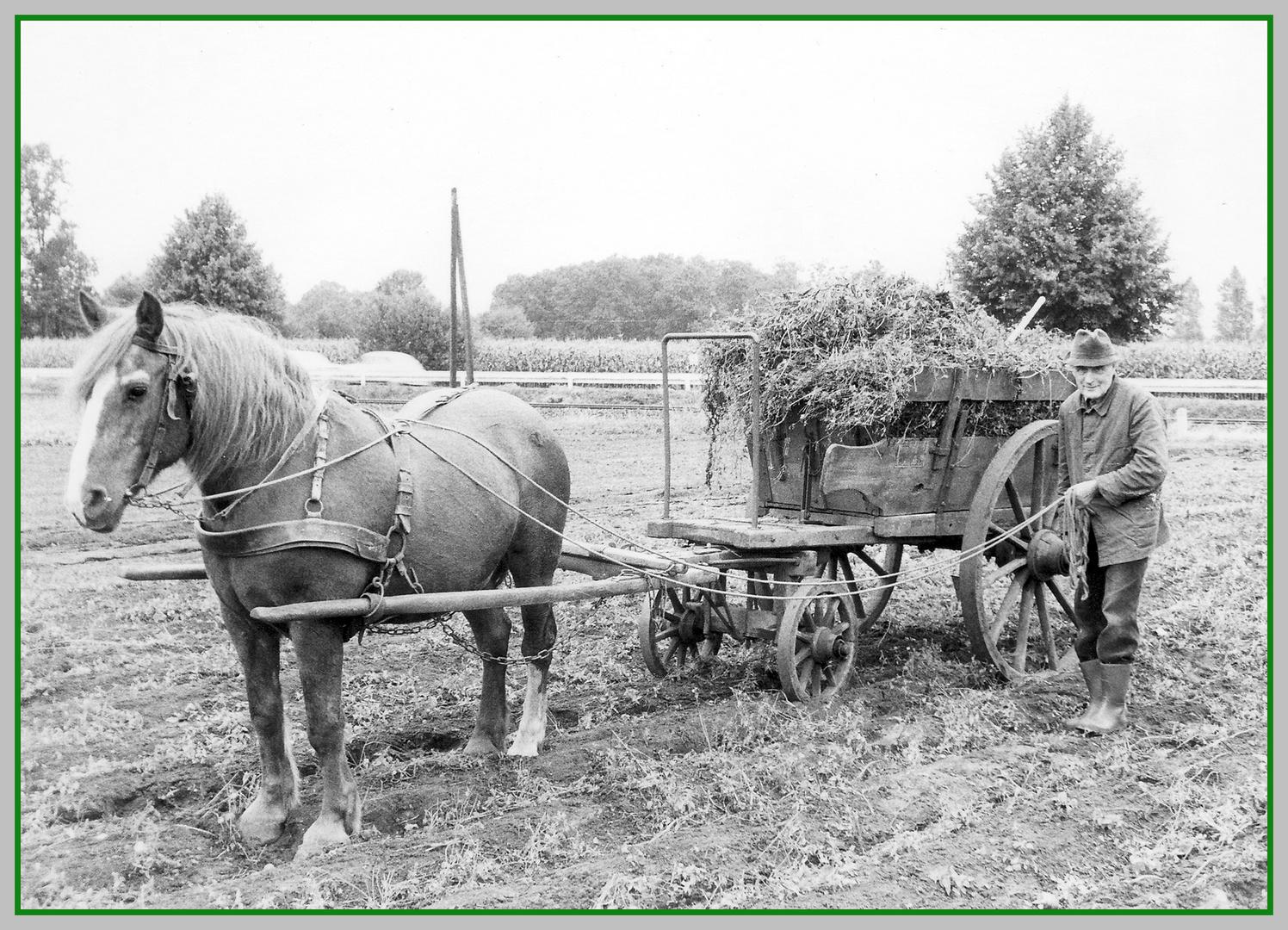 Pferd und Bauer bei der Arbeit