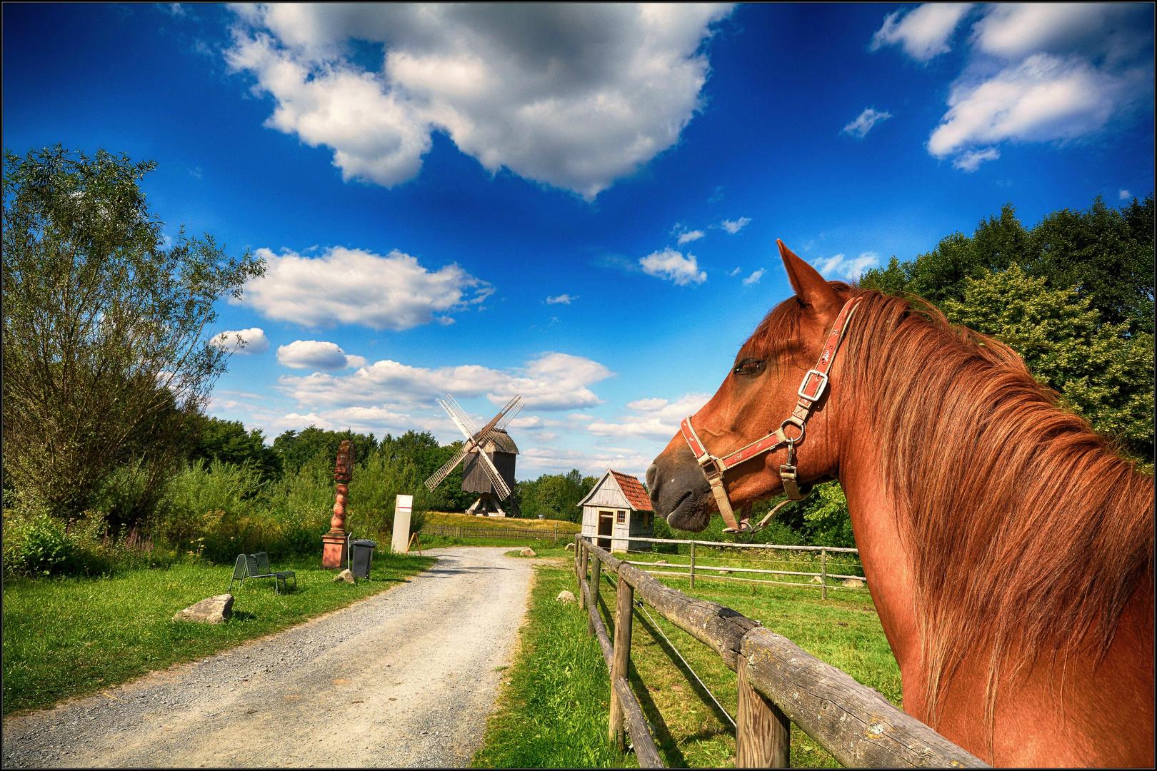 Pferd und Windmühle