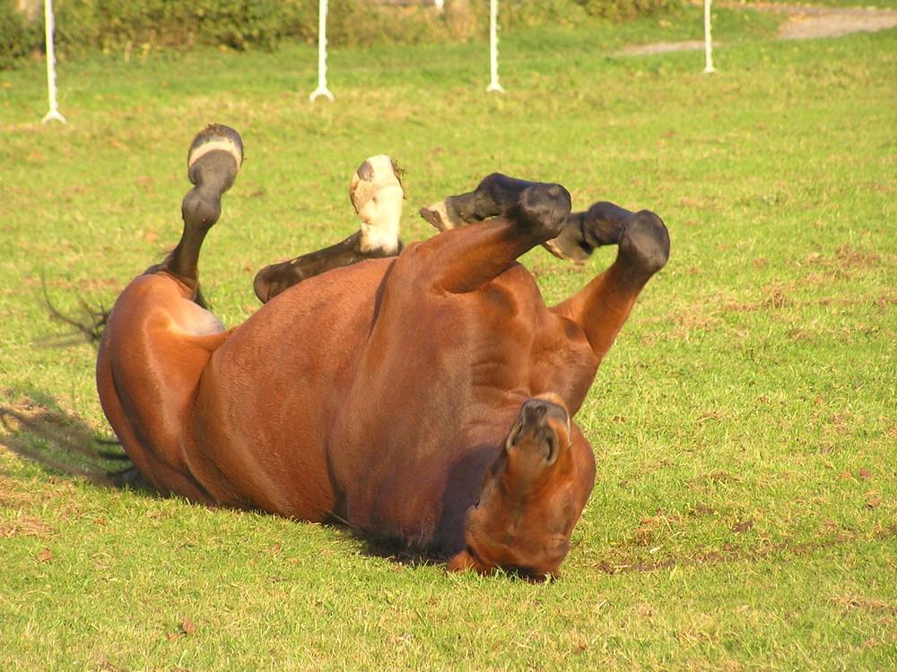 Pferd verkehrt