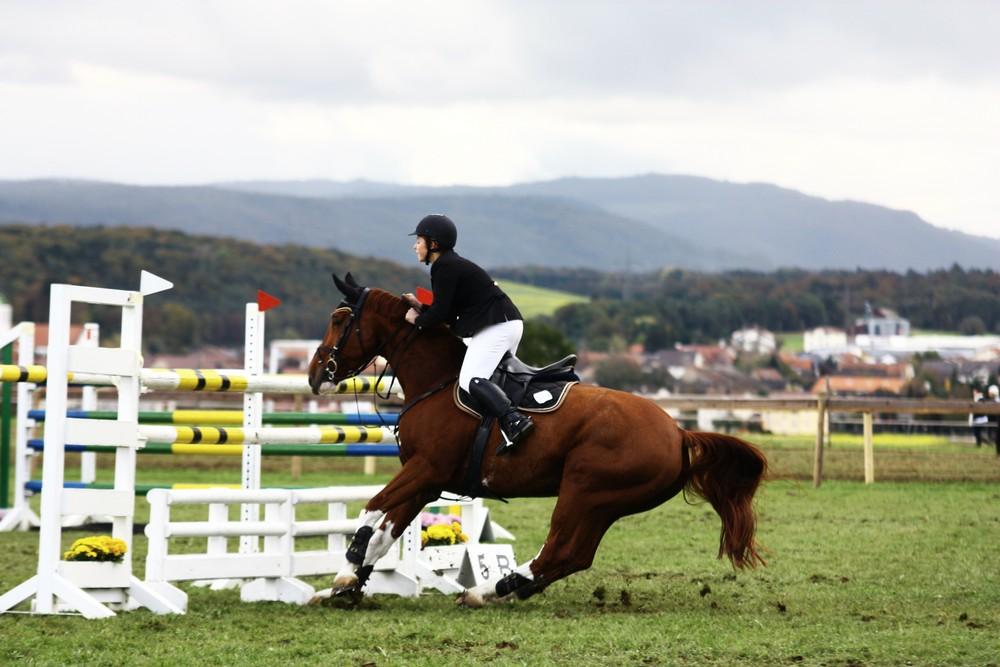 Pferd verweigert Hindernis