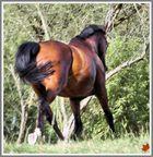 ... Pferd weg - Bild verschwommen