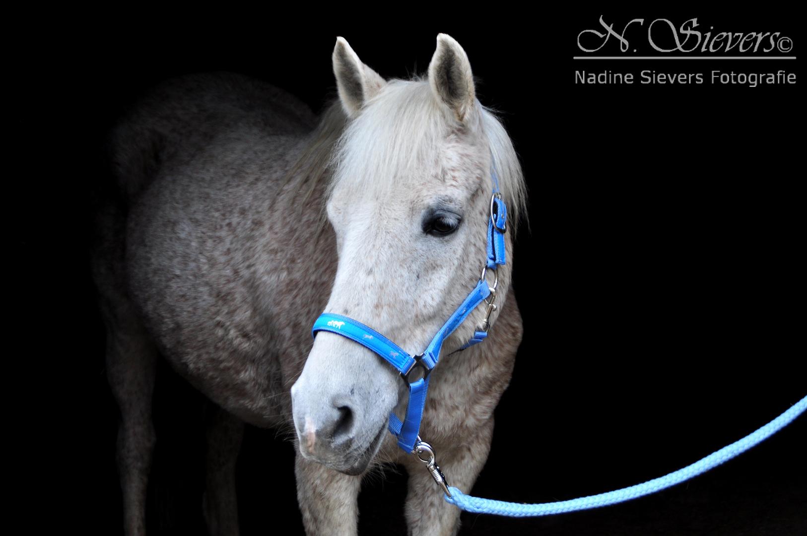 Pferd Weiss auf Schwarz