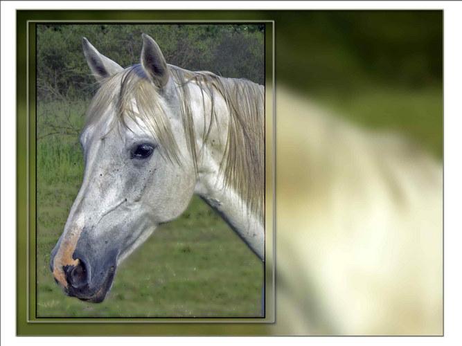 Pferd_6047_1