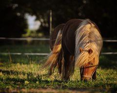 Pferdchen...