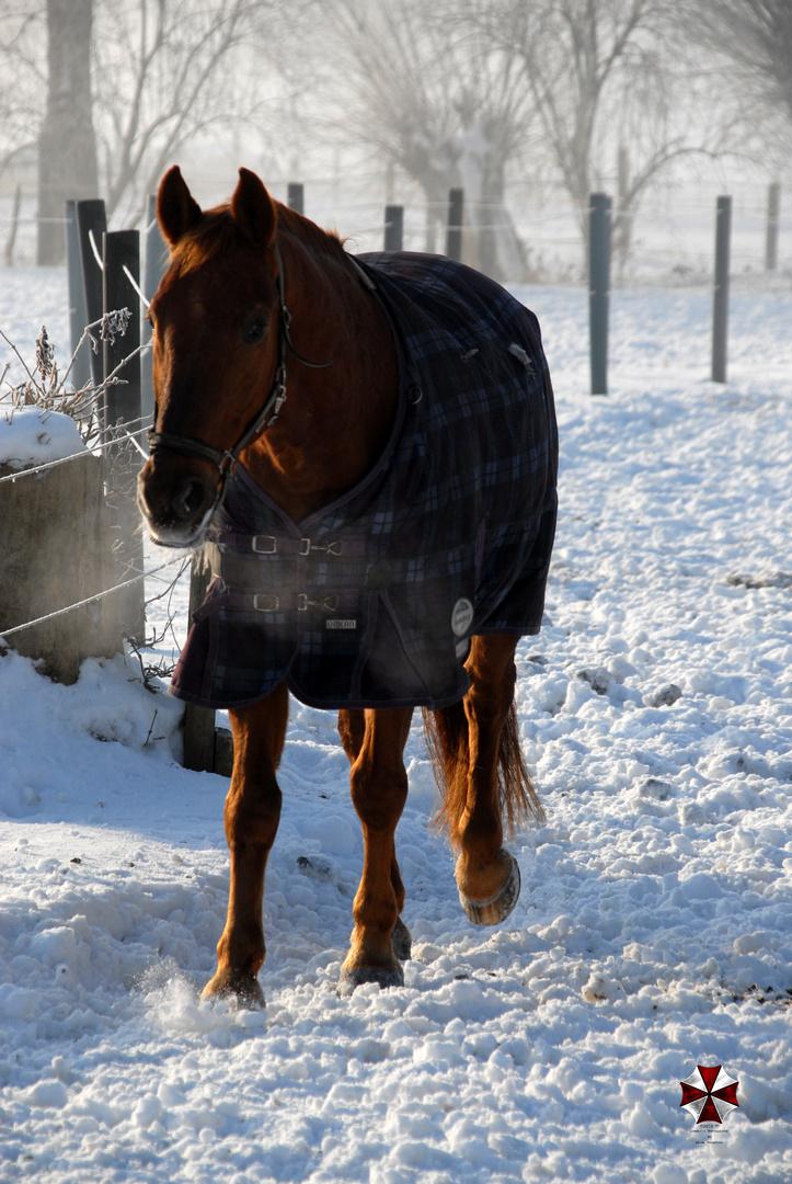 Pferdchen im Schnee