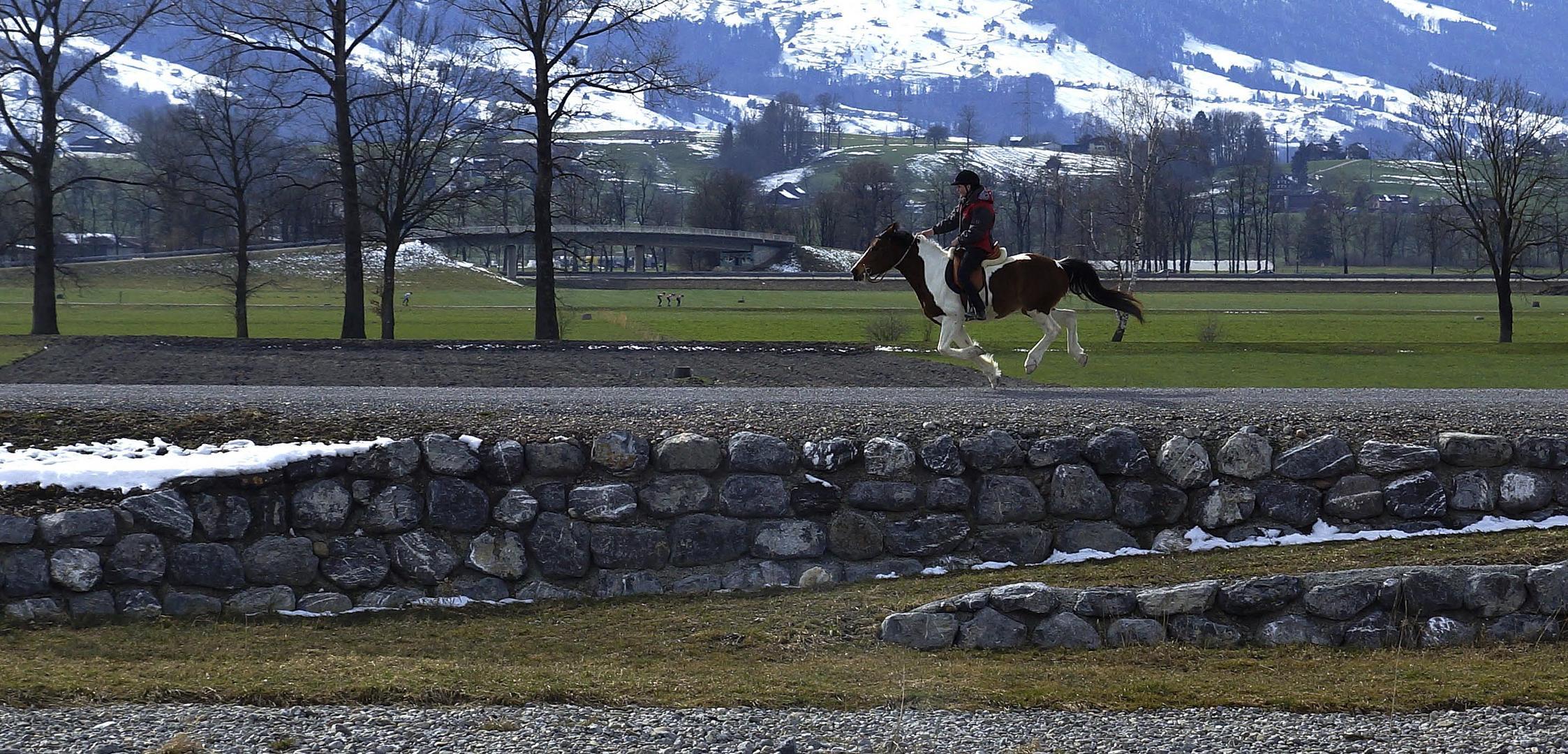 Pferdchen lauf Galopp............