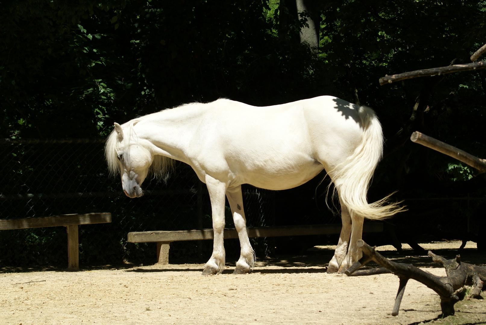 pferdchen oder nicht?