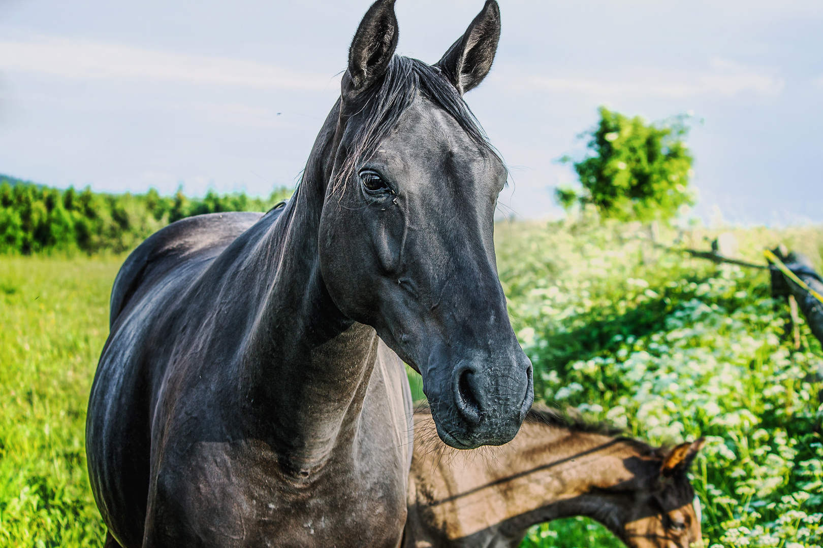 Pferde 02