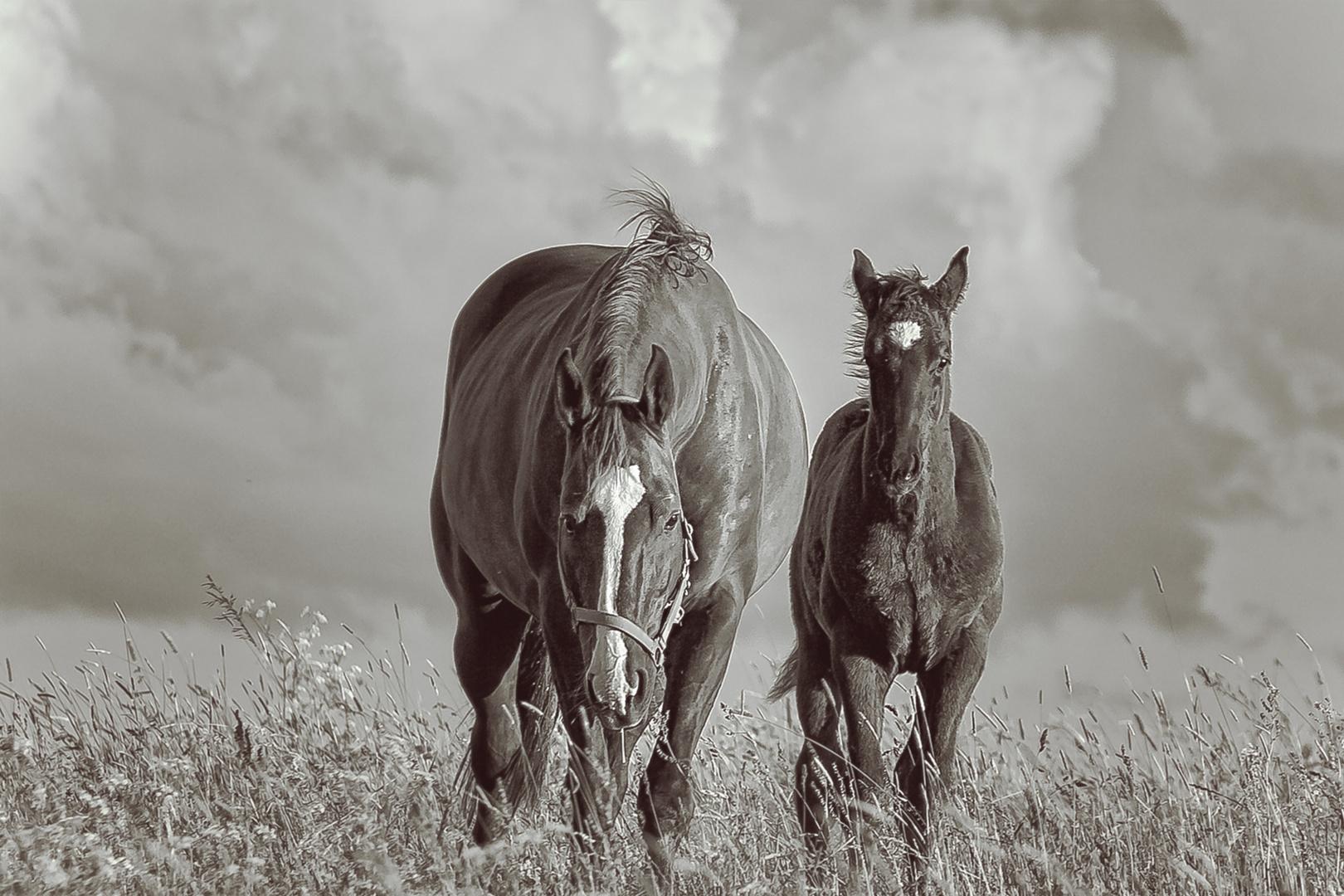 Pferde 04