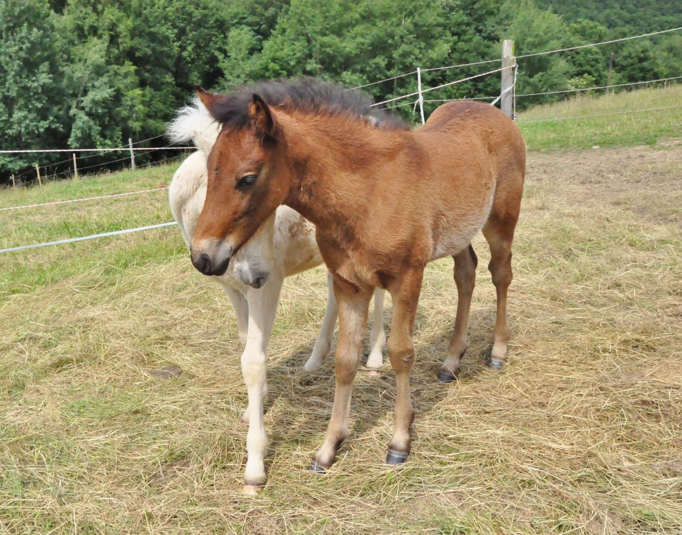 Pferde 15: Fohlenliebe