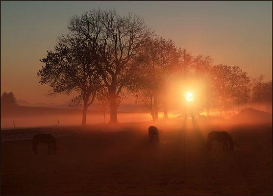 Pferde ....
