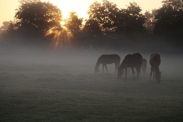 Pferde am Morgen2