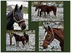 Pferde auf einer winterlichen Koppel . . .