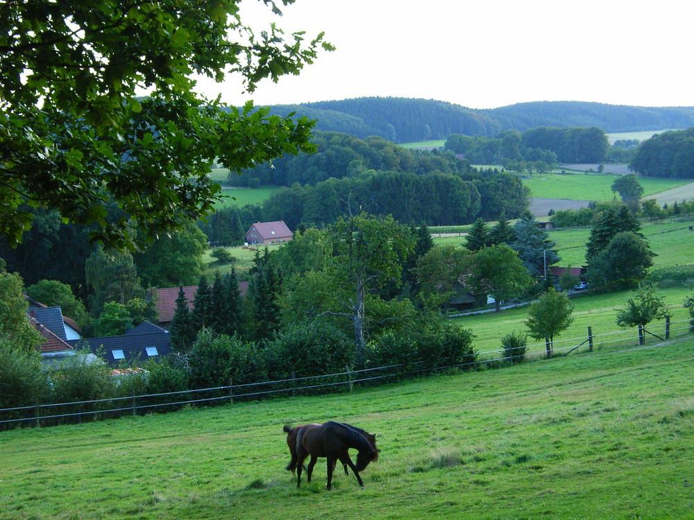 Pferde auf Koppel im westlichen Teutoburger Wald