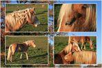 Pferde aus der Gegend.....