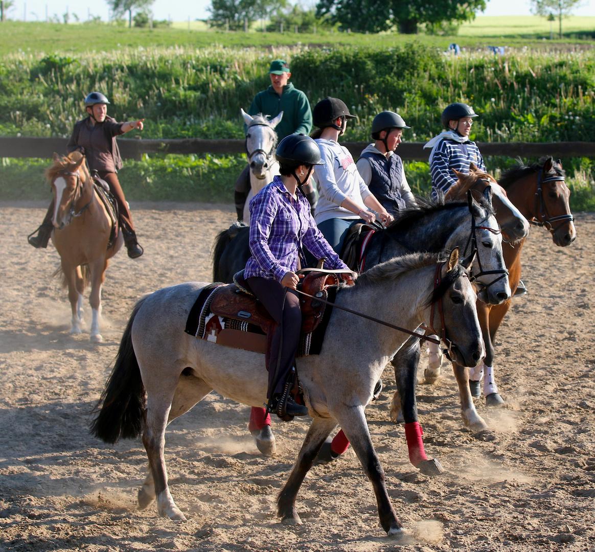 Pferde bei der Arbeit