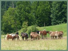 Pferde beim Auerberg / Bay.