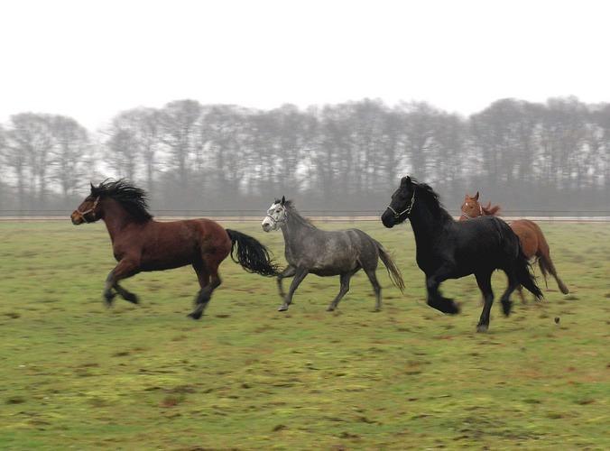 """Pferde beim """"Austoben"""""""