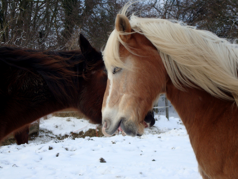 Pferde beim Spielen