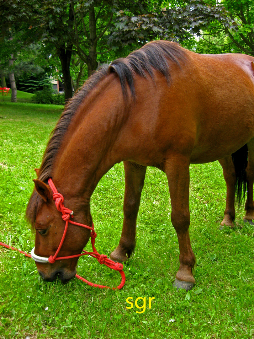Pferde.....