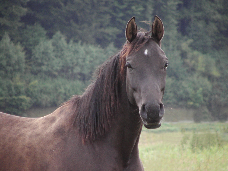 Pferde entlang der Weser - Fortsetzung