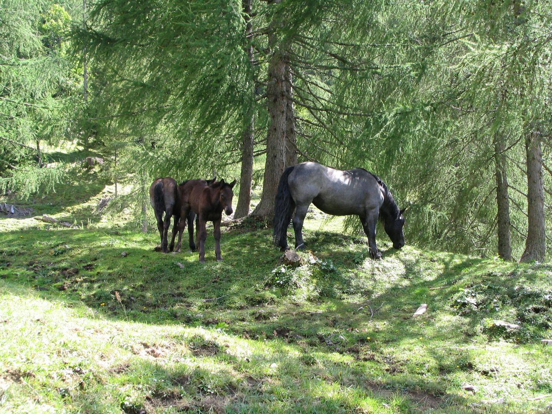 Pferde-Familie
