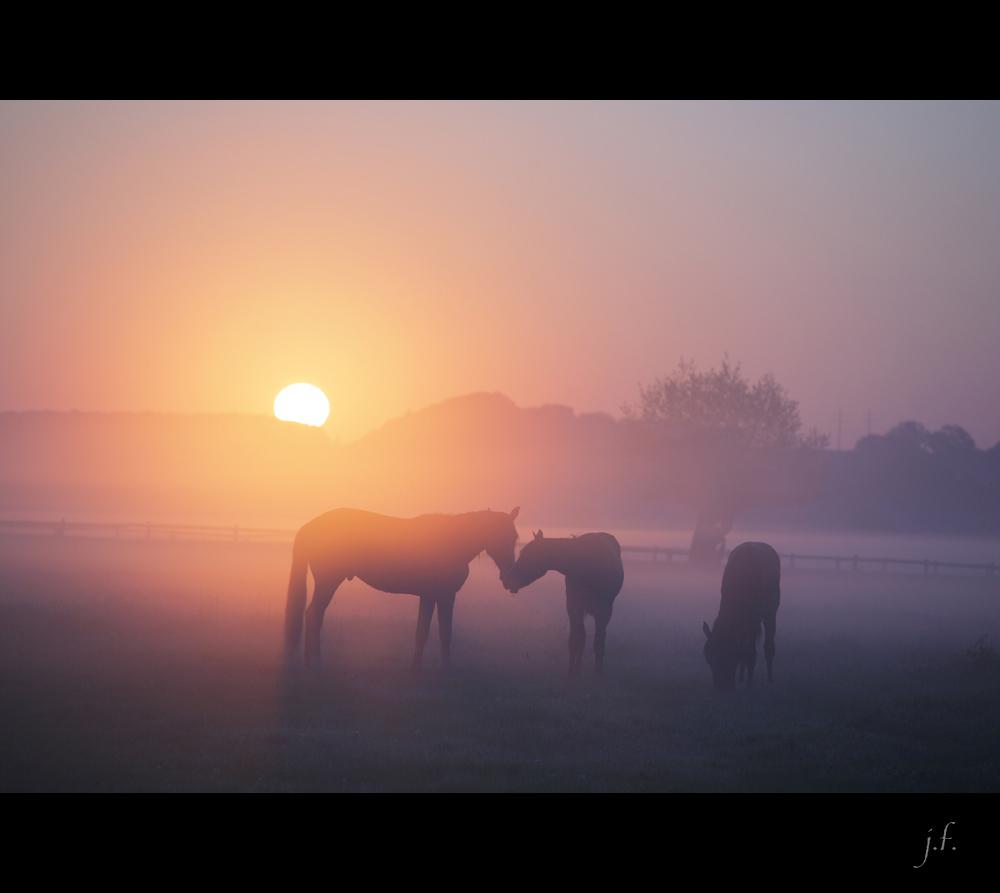 Pferde flüstern im Nebel bei Sonnenaufgang