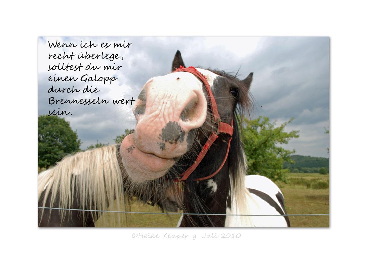 Pferde haben viel Gefühl / Brennesseln