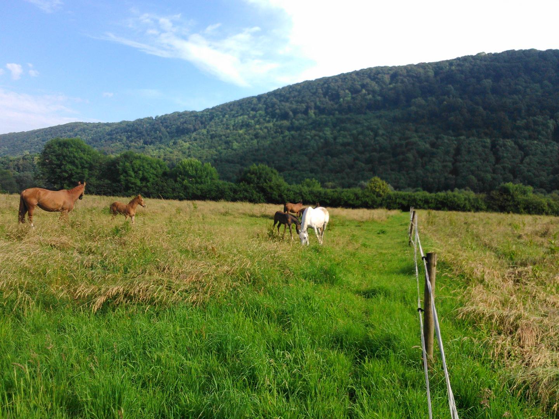 Pferde Idylle