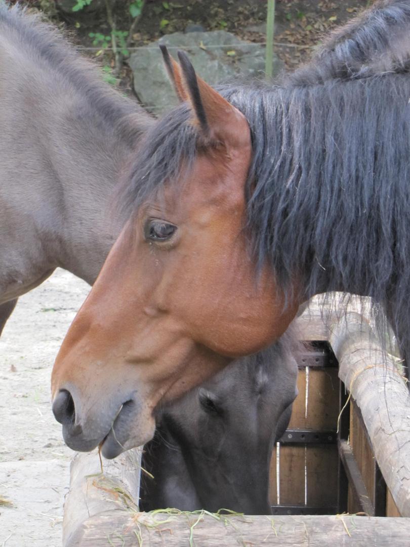 Pferde im Allwetterzoo Münster