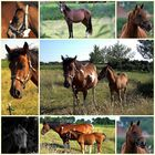 Pferde im Emsland