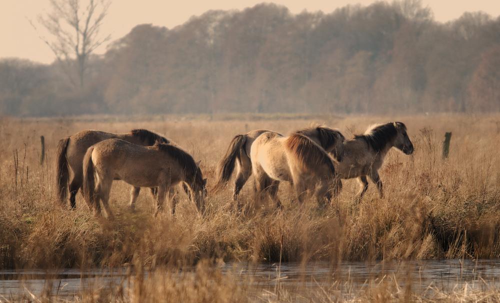 Pferde im Februar