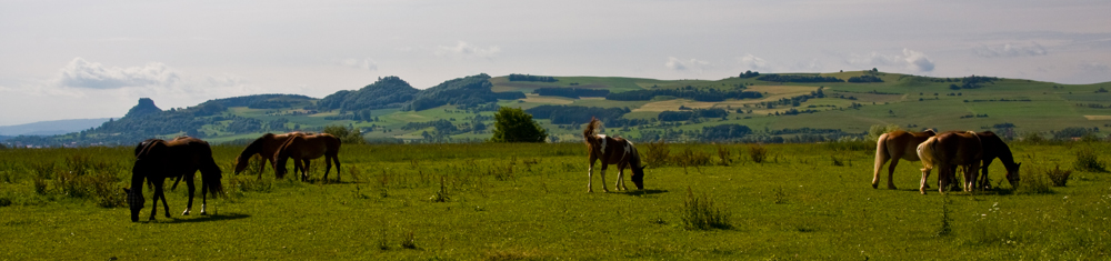 Pferde im Hegau