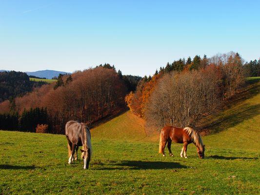 Pferde im Herbst 2