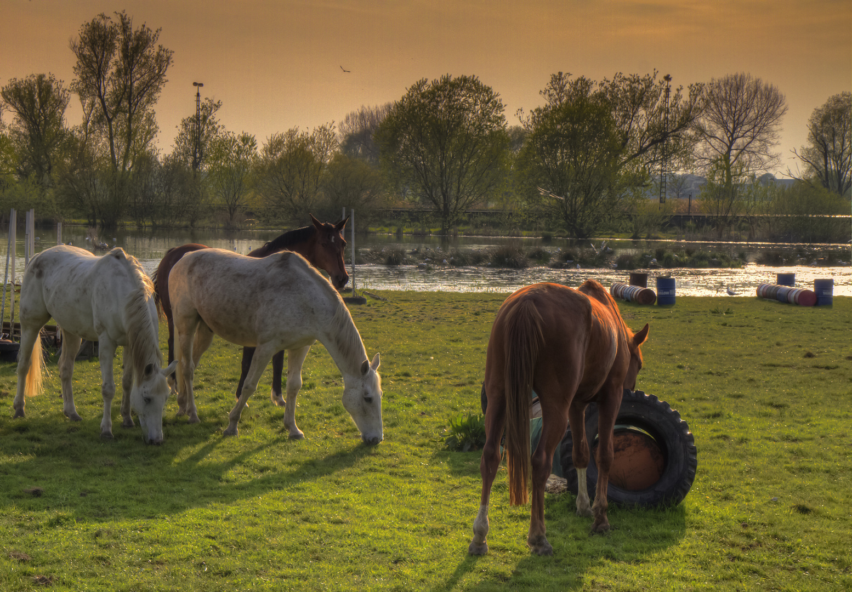 Pferde im Lichtschein