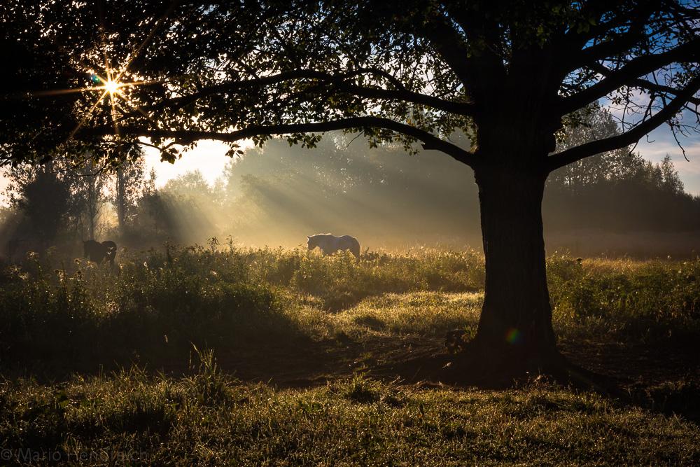 Pferde im Morgenlicht