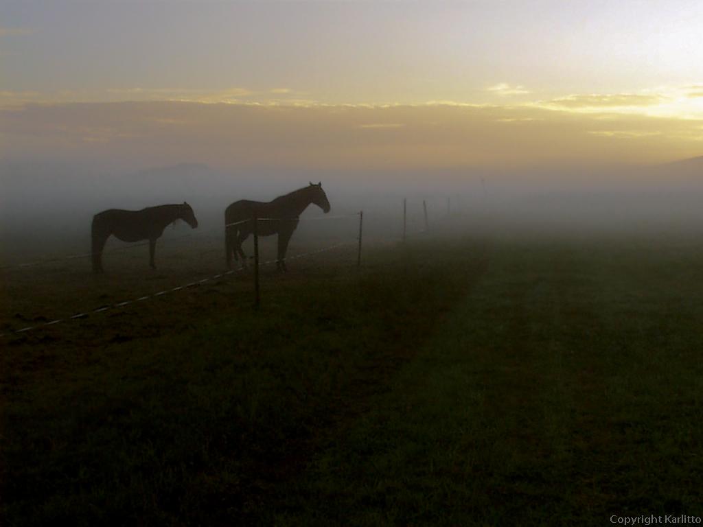 Pferde im Morgennebel