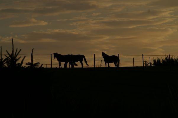 Pferde im Morgenrot