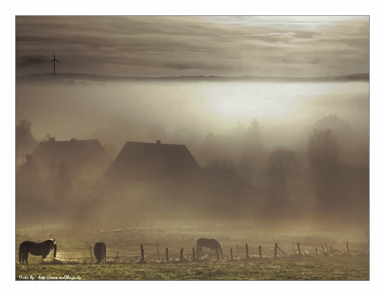 Pferde im Nebel Foto & Bild | nebelstimmungen, wetter ...