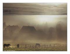 Pferde im Nebel