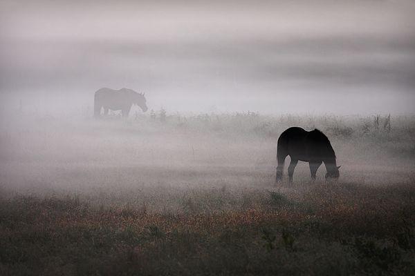 Pferde im Nebel .....