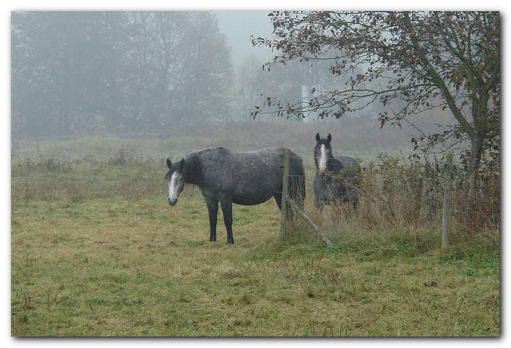 Pferde im Nebel II