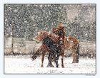 Pferde im Schneetreiben