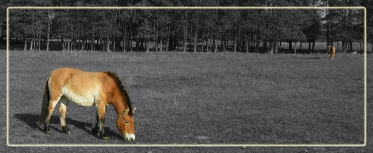pferde im wildpark schorfheide