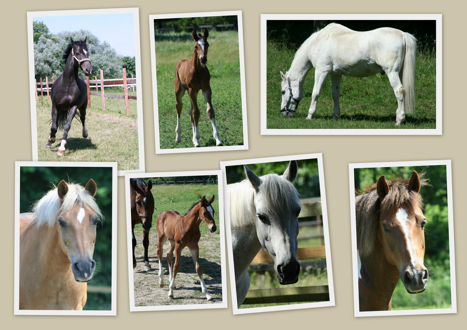 Pferde - Impressionen