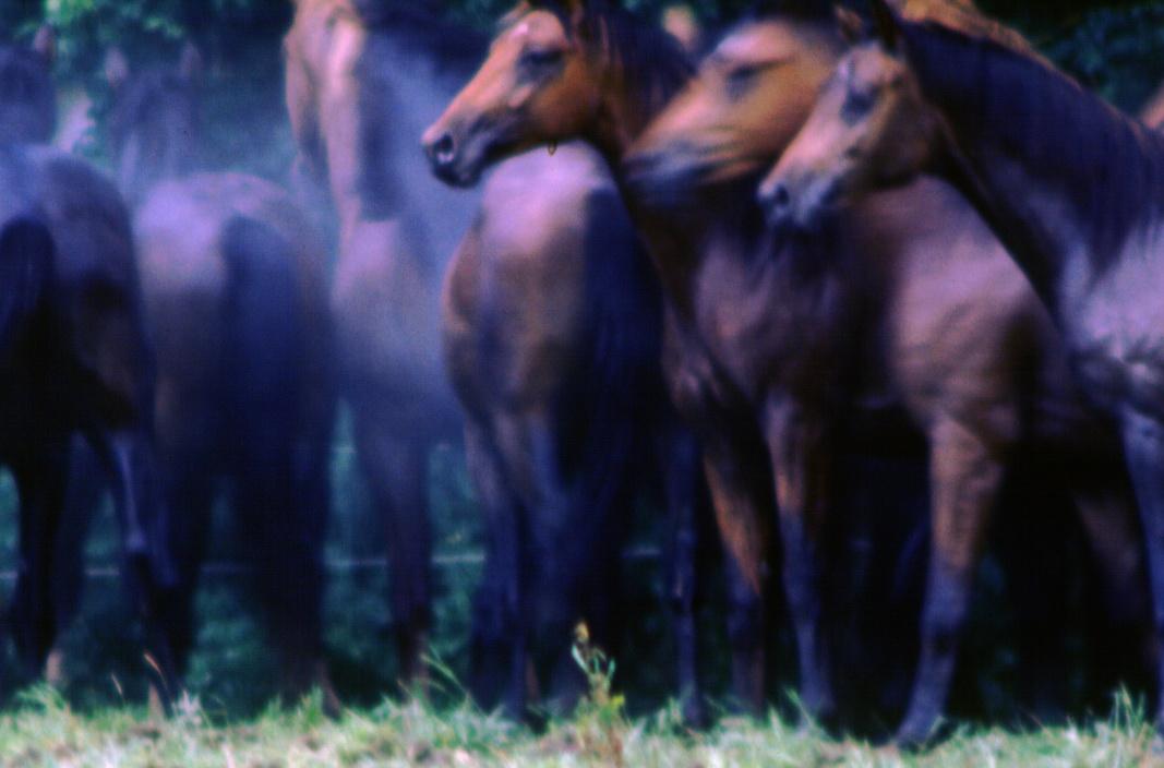 Pferde in abwartender Spannung